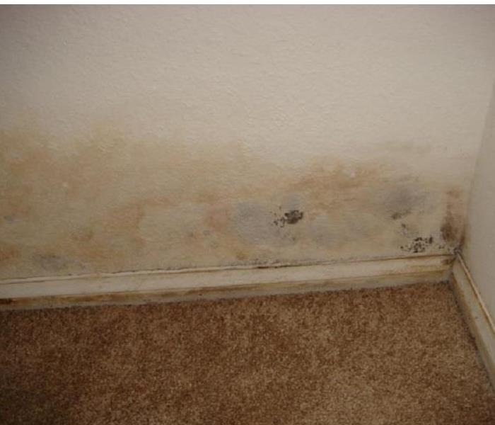 Mold Can Spread Before